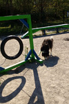 Le pneu - Parcours d'agility de l'aire de Montélimar Est