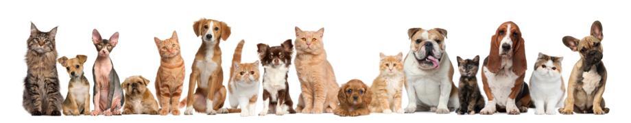 www.chiens-en-vacances.fr